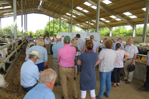 Cattle shed at James Bartons 2019