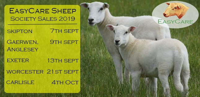 Easy Care Sheep Sales 2019